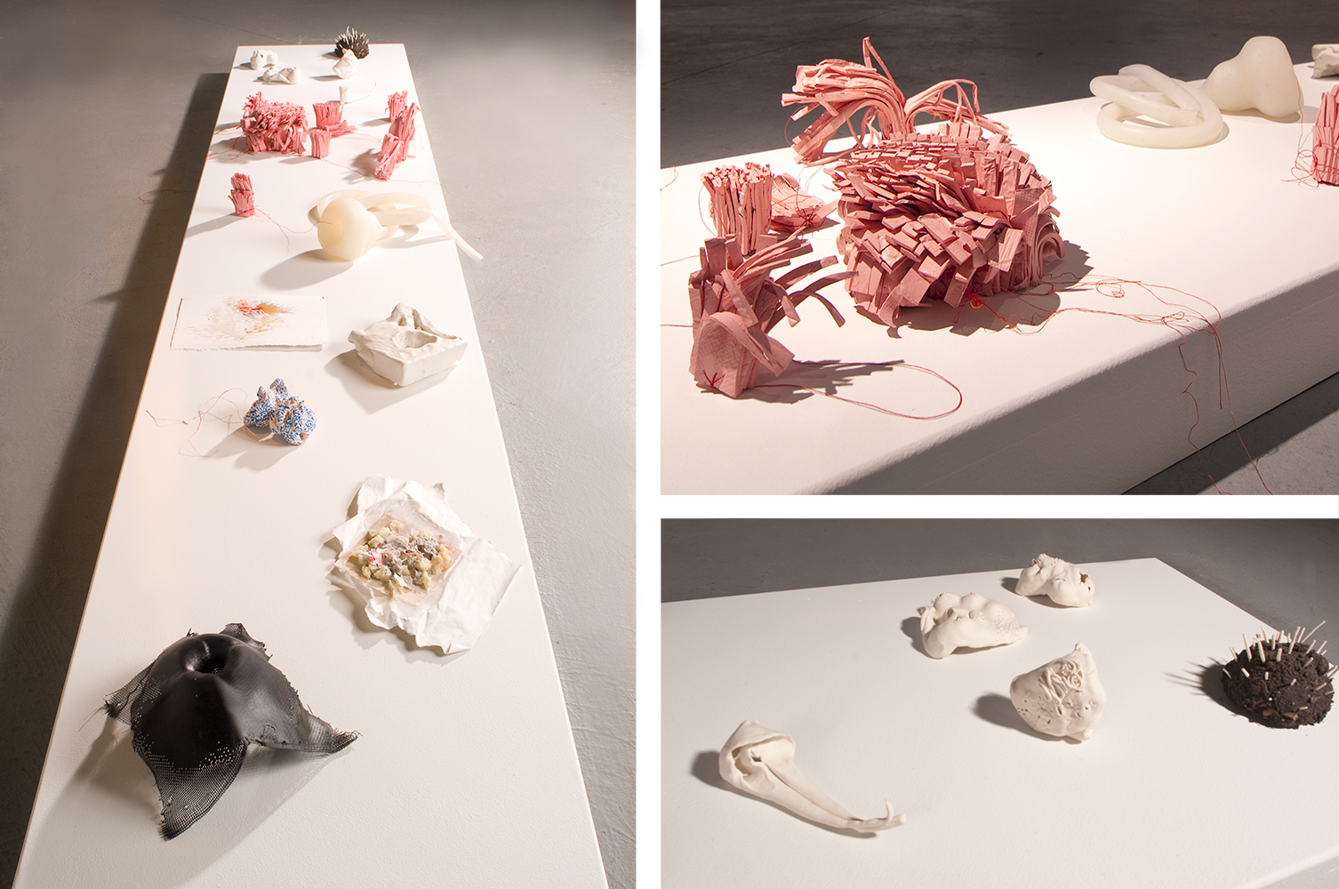 installation, specimens